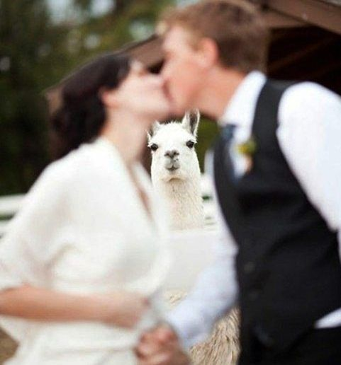 fotografii ciudate nunta (1)