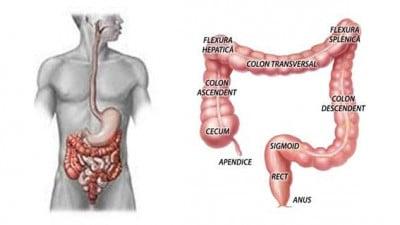 HEMOROIDECTOMIE-SCHITA-MEDICALA